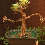 bonsai tree ent