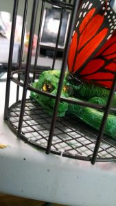 Fairy Dragon Close up Cage